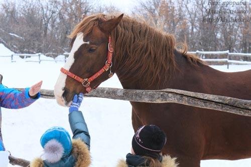 фото конь
