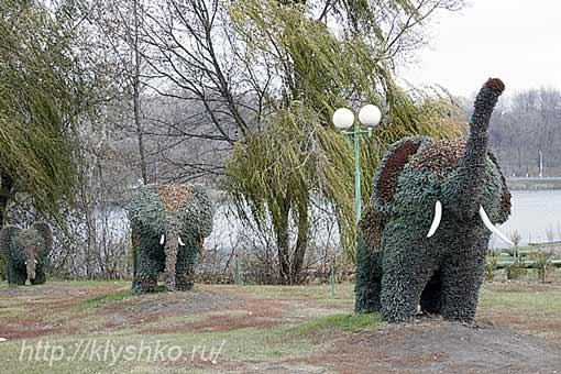Губкин слоны