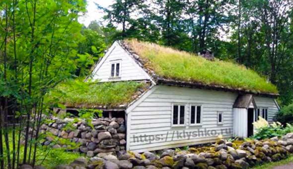 зеленая-крыша