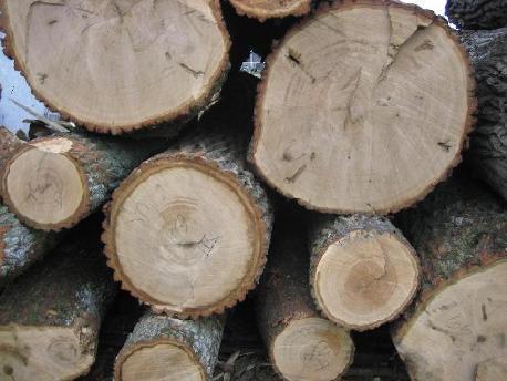 прочные породы дерева